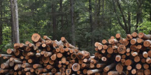 logging in forest