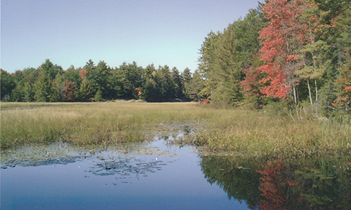 pencil creek marshland