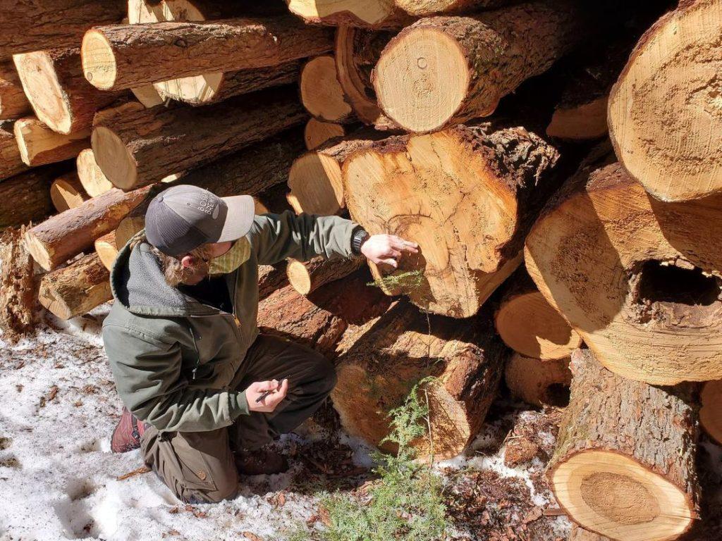person beside logs